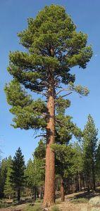 Wenn Dein Selbstwert ein Baum wäre
